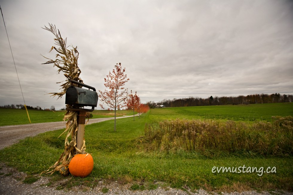 image of country driveway with red trees and pumpkin