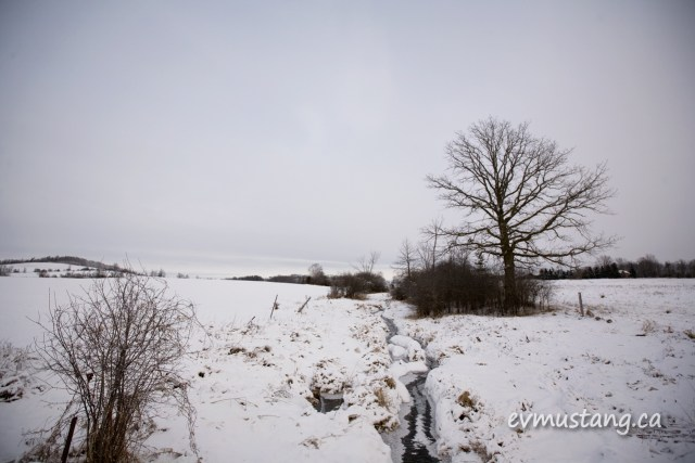 image of fresh snow on a narrow creek by a tree