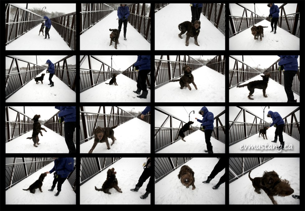 images of dog in snow