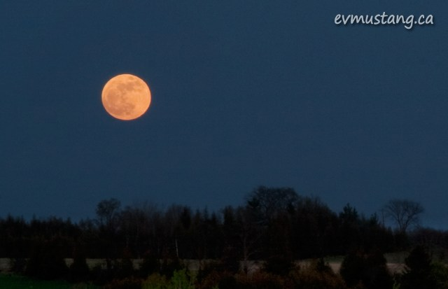 image of the largest full moon of the year rising over the trees