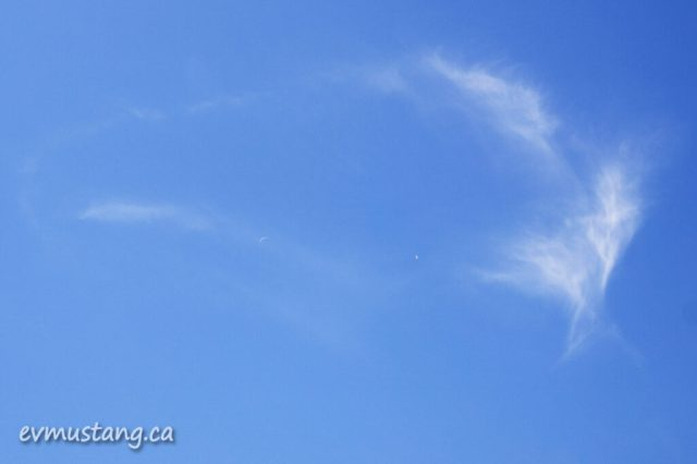 image of sky with seagull and crescent moon