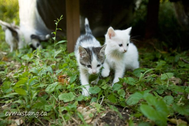 image of two kittens out doors