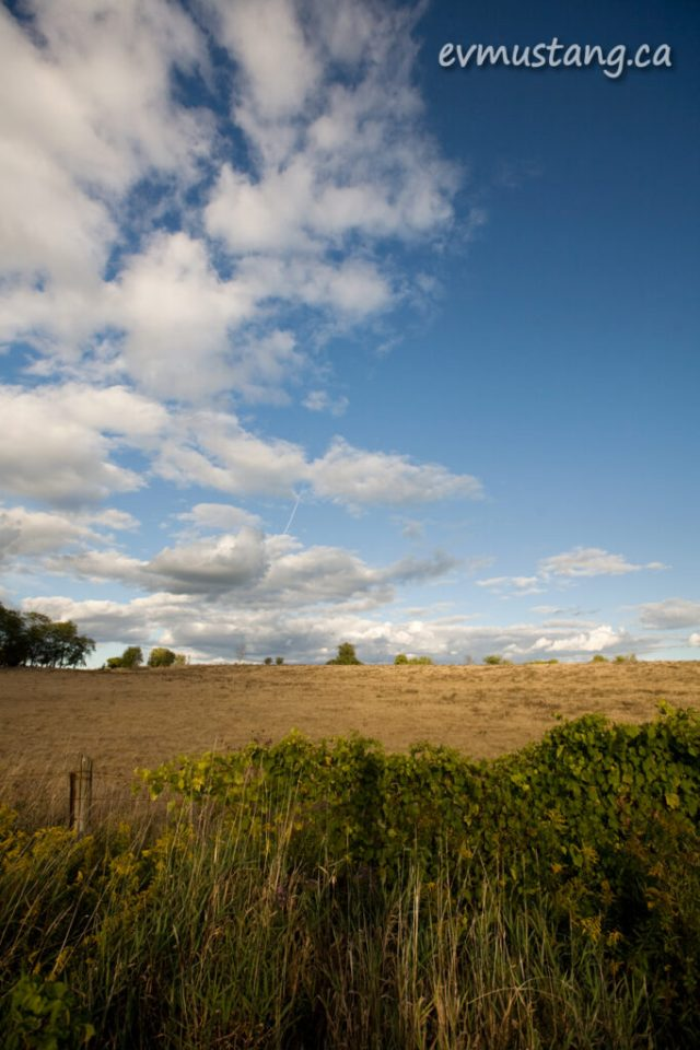 image of field in early autumn