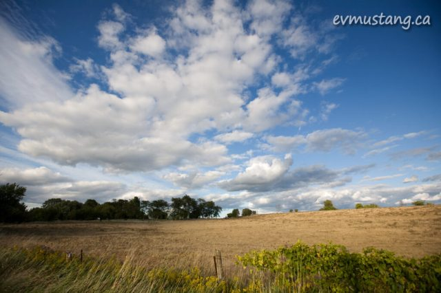 image of sun soaked early autumn field