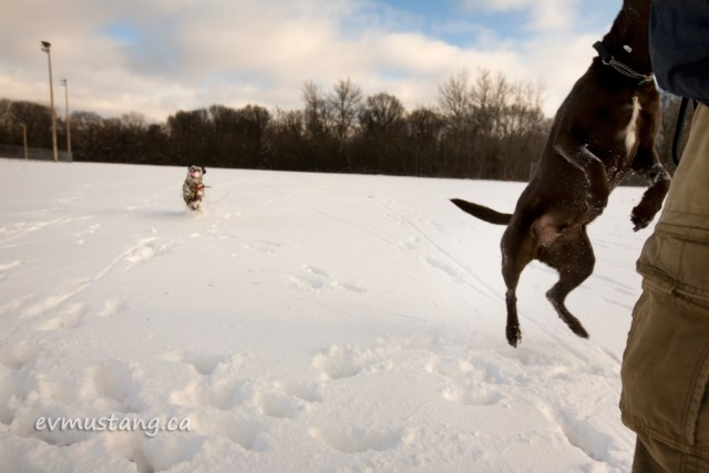 image of dogs in snow