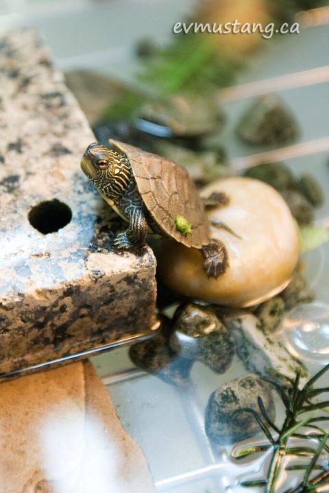 turtles05