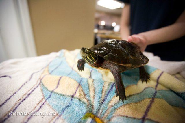 turtles10