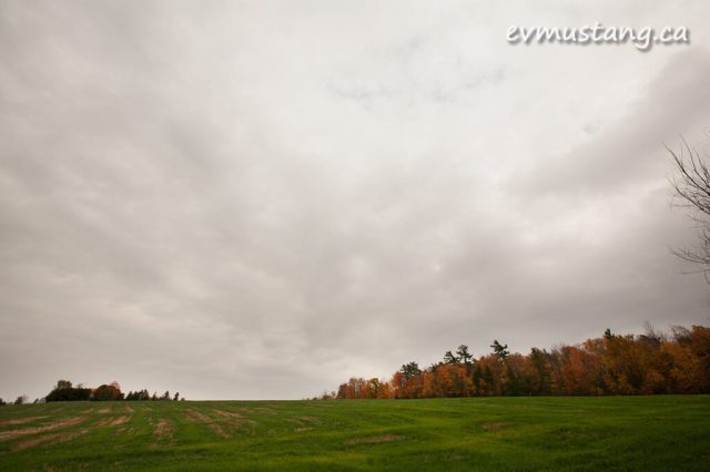 image of green field and autumn trees
