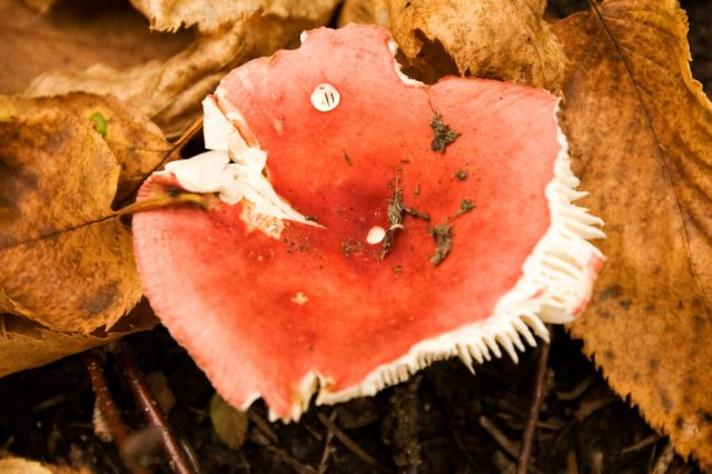 image of unidentified fungus