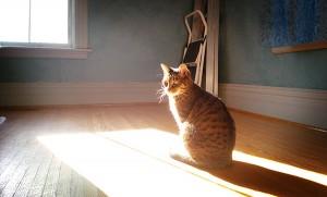 image of cat in sun through window