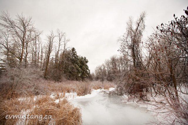 image of pond after an ice storm