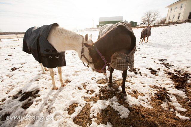 spring_horses1