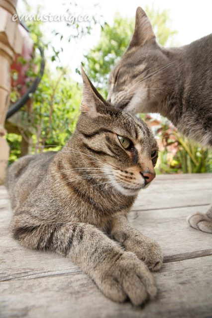 image of cat licking another cat's head