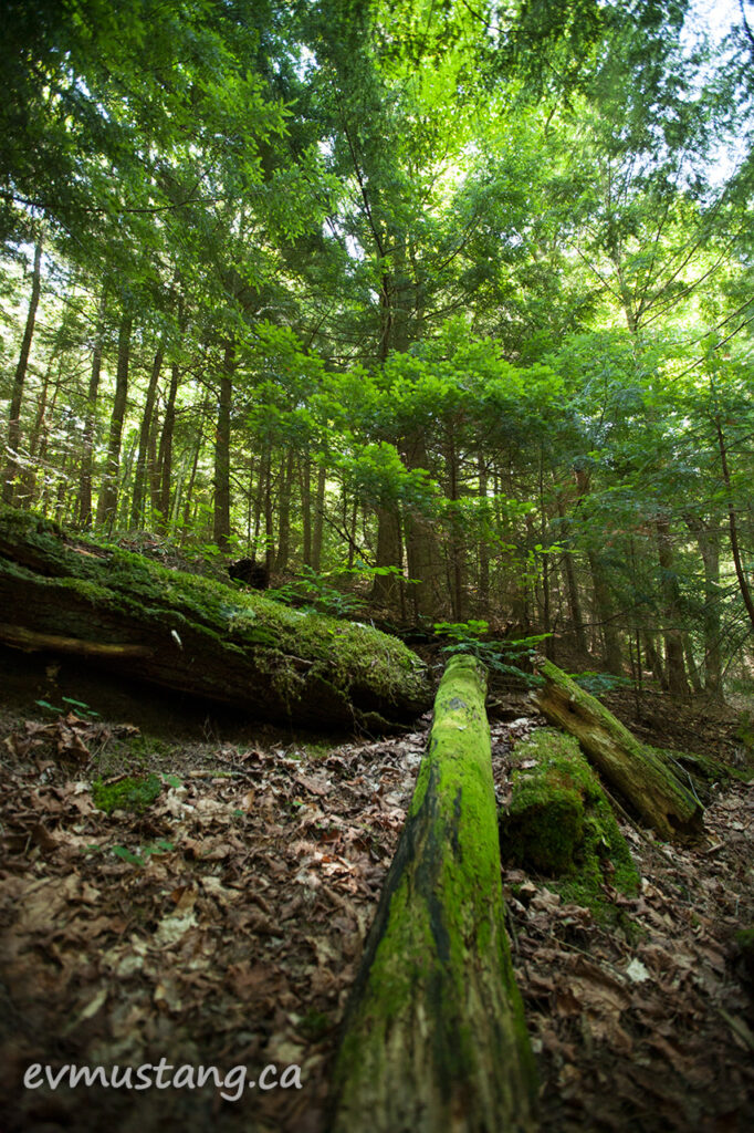 northern_green_woods01