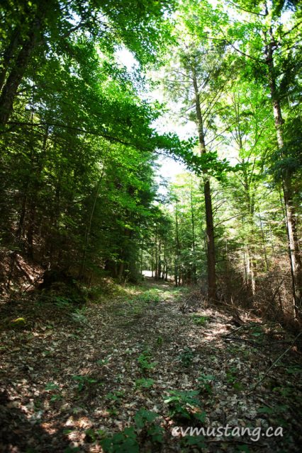 northern_green_woods02
