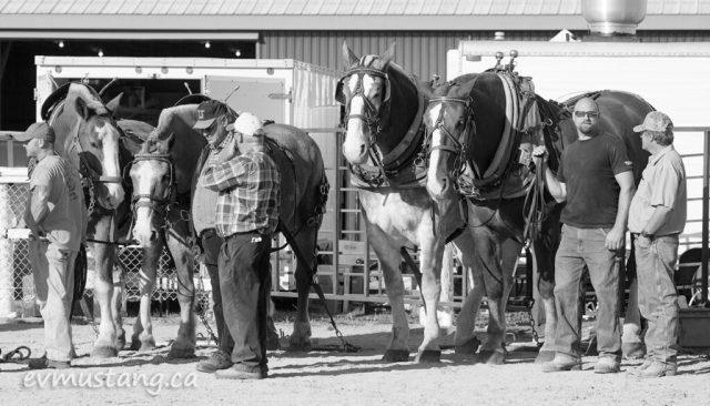 norwood_horses_03