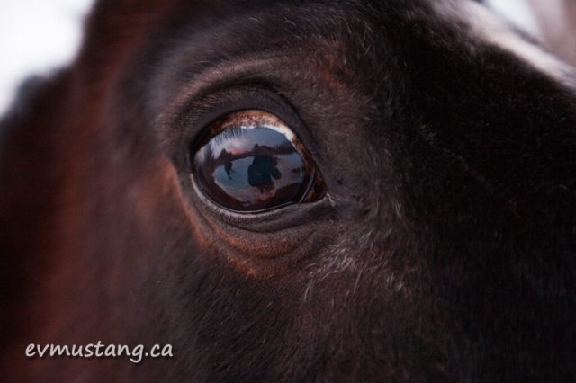 image of horse and person reflected in a horse's eye