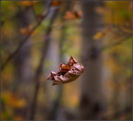 Voir les choses telles qu'elles sont : la leçon des feuilles