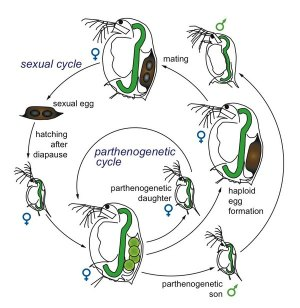 Ecology, epidemiology, and evolution of parasitism in