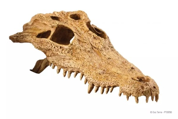 Exo Terra Crocodile Skull, PT2856