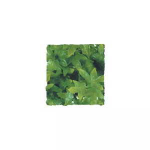 ZooMed Congo Ivy