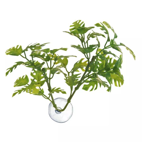 ZooMed Bolivian Croton