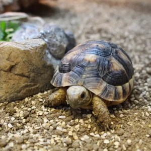 Tortoise Feeding Talk - 30th May 2016