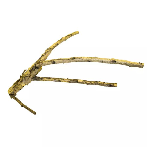 ProRep WHITE Acacia Branch LARGE