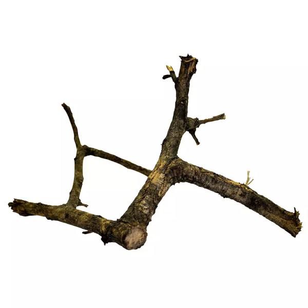 ProRep BLACK Acacia Branch X-LARGE
