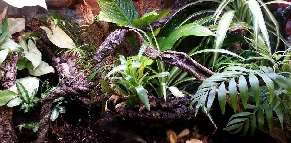 Planted terrarium croped
