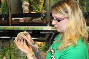 Crested Gecko and Carly