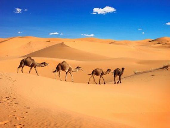 Dormire nel deserto in Marocco  possibile con Evolution