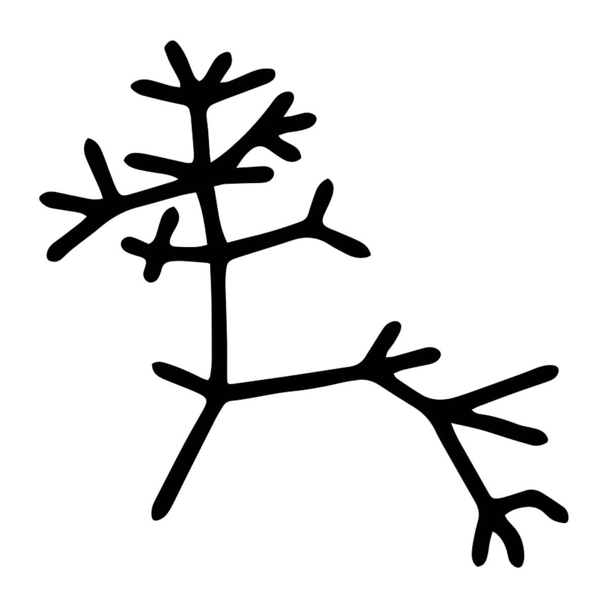 Darwin Tree of Life Outline Weatherproof Vinyl Decal
