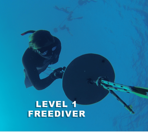 level 1 freediving course diver at plate dives down line