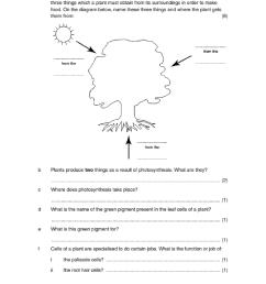 Photosynthesis worksheet [ 1118 x 960 Pixel ]