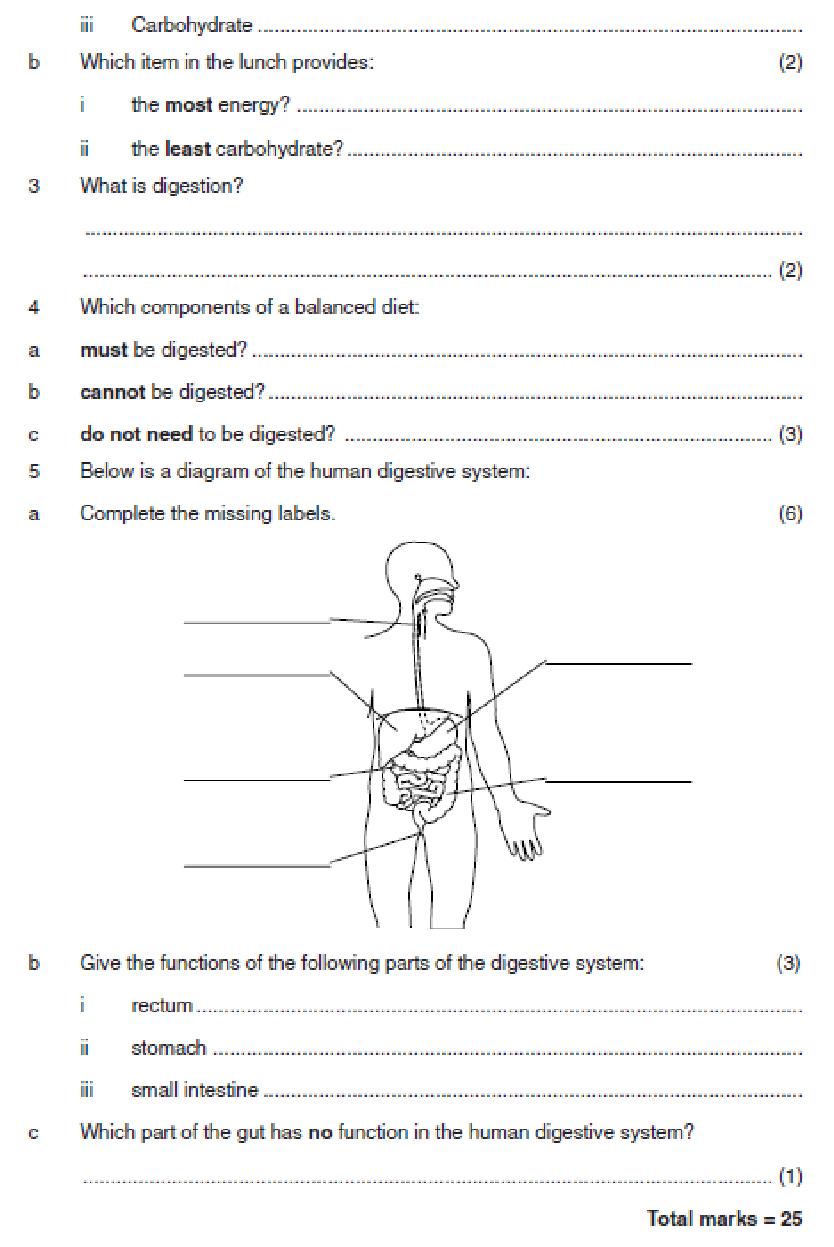medium resolution of Digestion worksheet