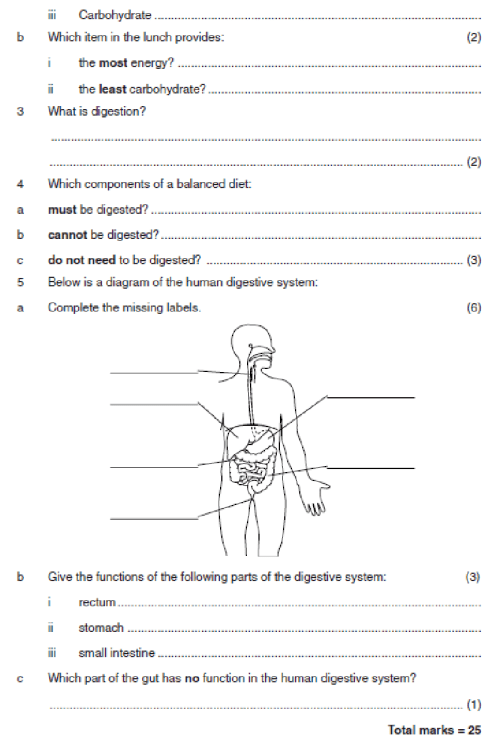 small resolution of Digestion worksheet