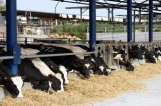 Κτηνοτρόφοι Έβρου: Πως θα διατηρήσουν την άδεια των εγκαταστάσεων τους