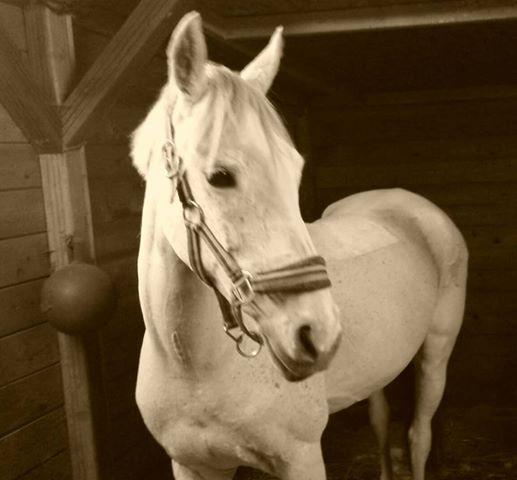 Eerste pony van het seizoen, naast mn eigen paarden, weer geschoren!