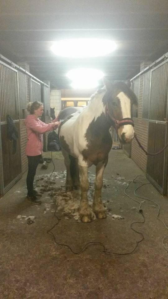 Weer een paard winterklaar