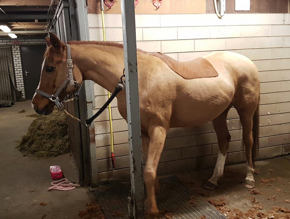 Weer een paard van haar dikke jas afgeholpen