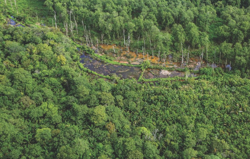 L'image du mois - la forêt amazonienne