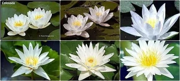 Cheap Pond Plants