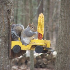 Squirrel Feeder Chair Akracing Gaming Of Solid Cedar With