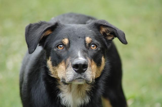 dog-793243_640