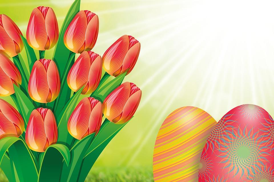 tulip-634023_960_720