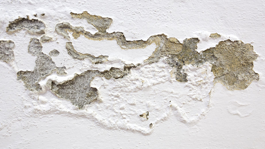 54300089 – mold on the wall