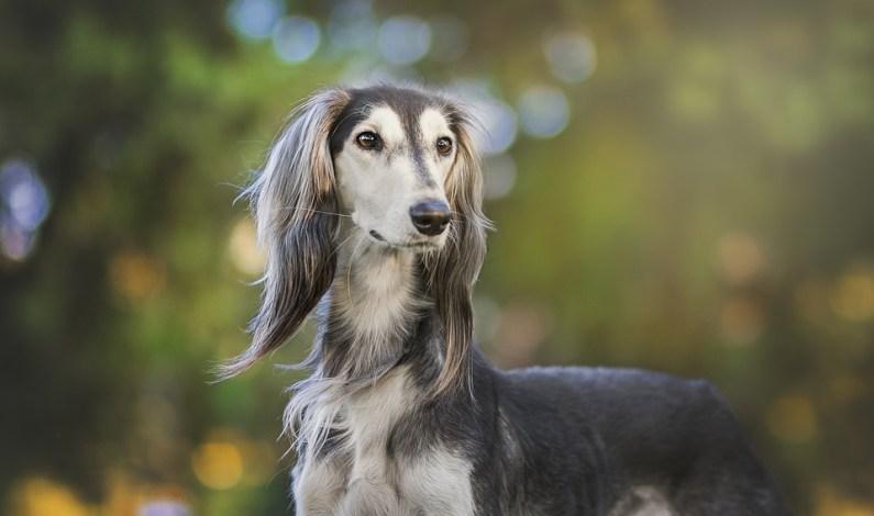 Za pár týdnů se koná největší psí festival v České republice, tak si ho nenechejte ujít