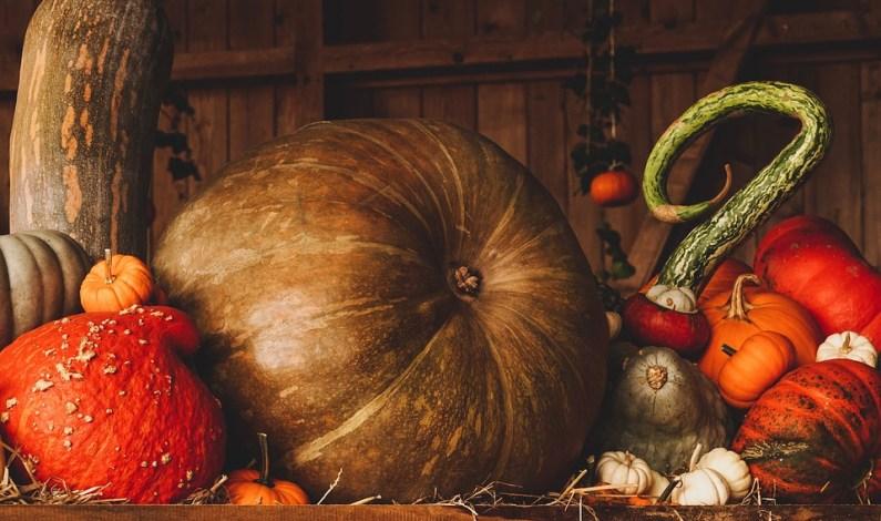 Džemy a čatní jsou hitem podzimu