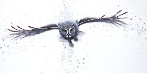 ewoud-de-groot-wildlife-owl02